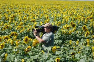 mike-wunsch-sunflowers